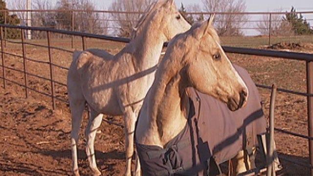 Legislature Passes Bills Allowing Horse Meat Processing In Oklahoma