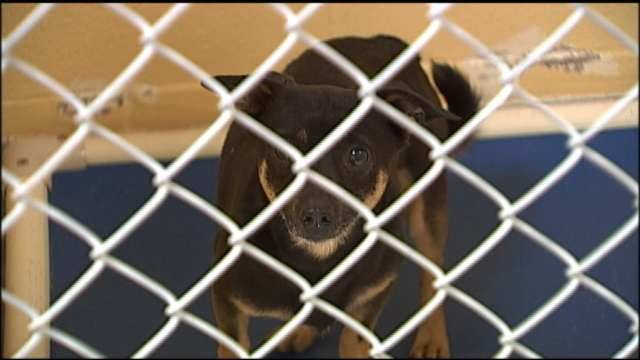 Tulsa Animal Lovers Petition City To Enforce Spay, Neuter Laws