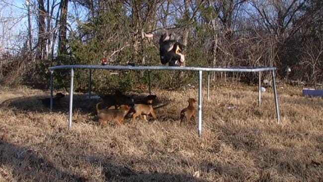 Rural Rogers County Family Stuck With 8 Puppies Left On Their Doorstep