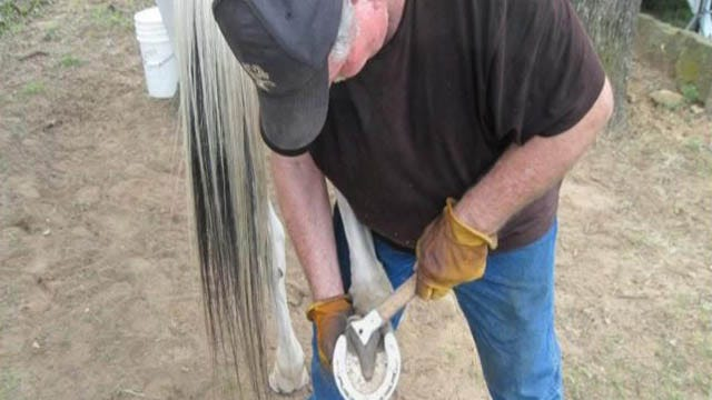 Tulsa Farrier's Business Crippled By Thieves