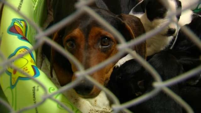 Facebook Helps Animal Welfare Reunite Owners With Lost Pets
