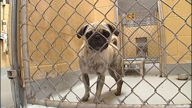 Adoptable Pets To Be Featured At Tulsa City Council Meetings