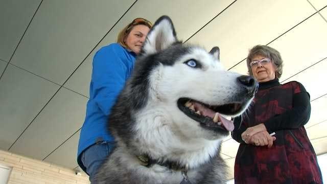 Oklahoma Pet Communicator Claims To Read Animals' Minds