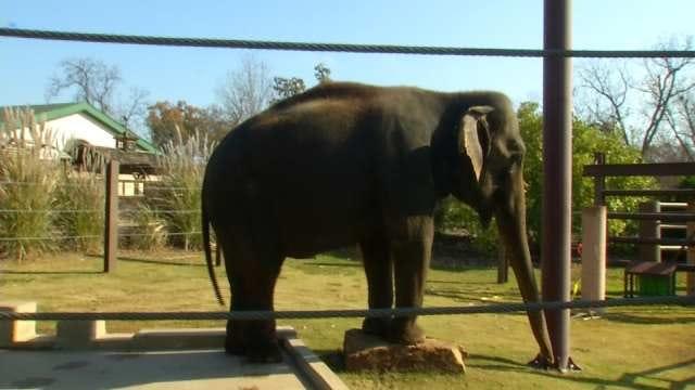 Tulsa Zoo Celebrates Elephant's 63rd Birthday