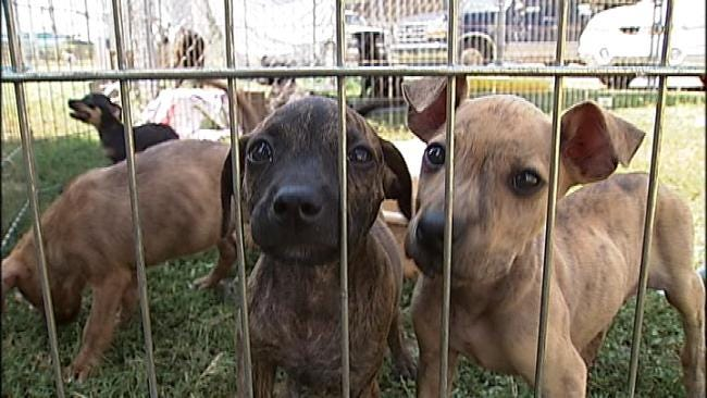 Tulsa SPCA Receives $8,000 Donation From 1st Oklahoma Credit Union