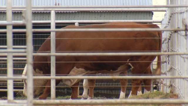 $100,000 Worth Of Cattle Stolen From Okmulgee Ranch