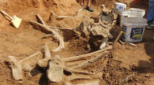 Students Excavating Remains Of Mammoth Found In Enid