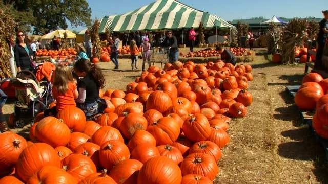 Carmichael's Pumpkin Patch In Bixby A Fall Tradition For Green Country Kids