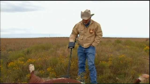 State Officials Investigating String Of Cattle Shootings In Nowata County