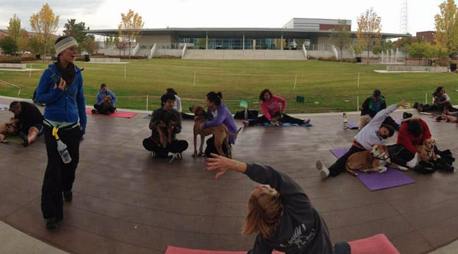 Pet And Yoga Lovers Perform Doga On The Green