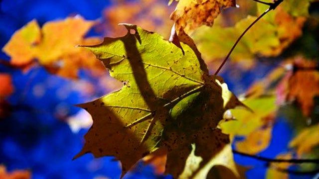 Cooler Weather, Rain Good For Oklahoma Fall Foliage