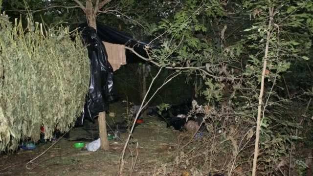 Creek County Hunter Stumbles Upon Massive Marijuana-Growing Operation