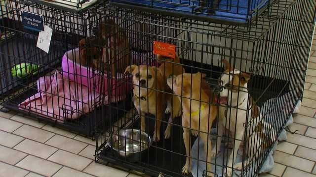 Total Of 60 Dogs Pulled From Tulsa Animal Hoarder's Home