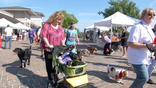 Tulsa-Area Shelter Pets In The Spotlight At Woofstock