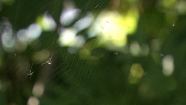 Spiders Use Their Silk To Take Flight Across Oklahoma