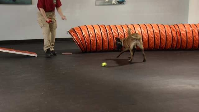 K9 Search And Rescue Group Trains For Severe Spring Weather