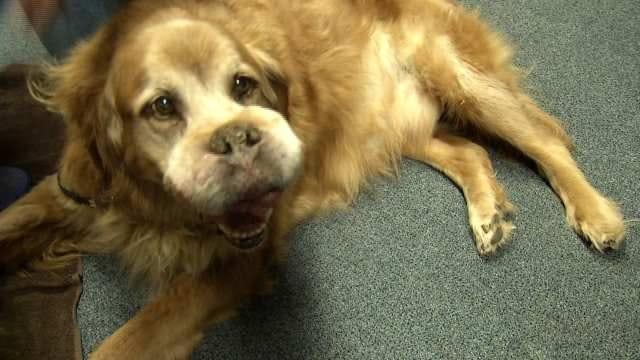 Special Needs Dog 'Platty' Draws A Crowd In Tulsa