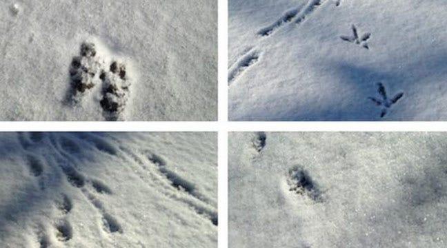 See Snow Tracks And Naked Mole Rats At Tulsa Zoo