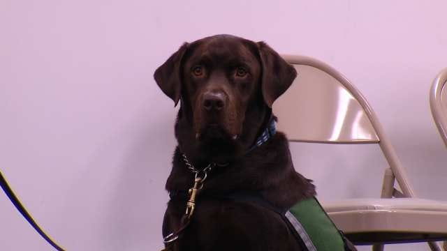 Autism Assistance Dog Makes World Of Difference For Tulsan