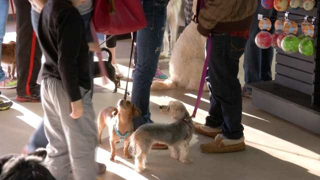 'Zoom Room' Opens For Tulsa-Area Dogs