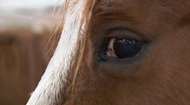 Potential Oklahoma Horse Slaughter Houses Hit Speed Bump