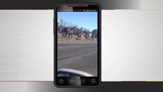 Horses Bring Traffic To A Stop In Okmulgee County