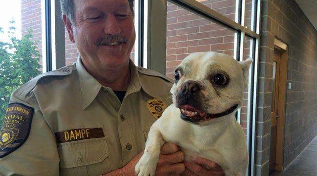 Stolen French Bulldog 'Pork Dumpling' Reunited With Owner