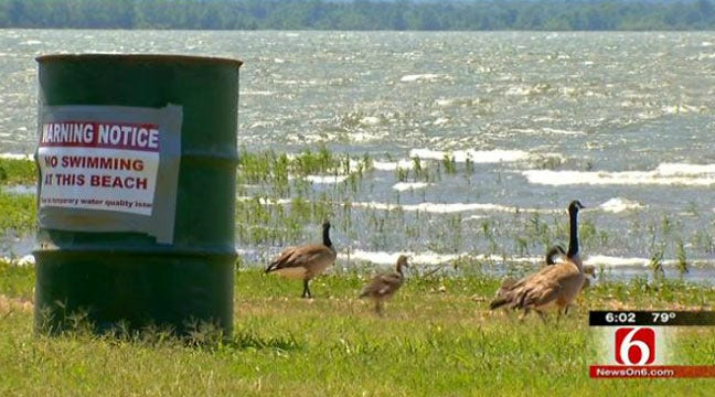 Geese Waste Blamed For E. coli At Grand Lake State Park Beach