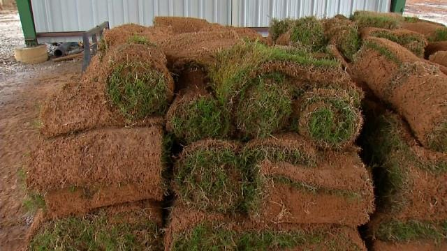 Green Country Sod Farmers Happy With Recent Rain
