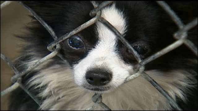 Oklahoma Woman Pleads Guilty To Animal Cruelty