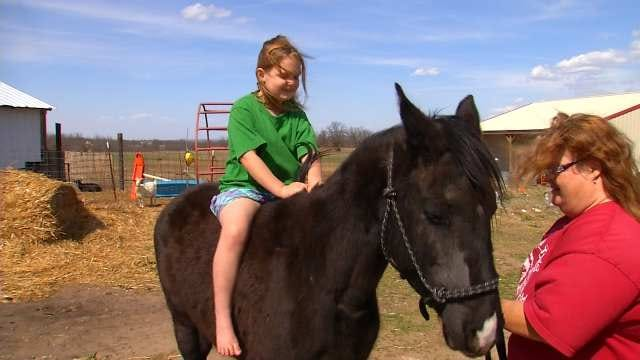 Creek County Horses Seized, Find New Homes