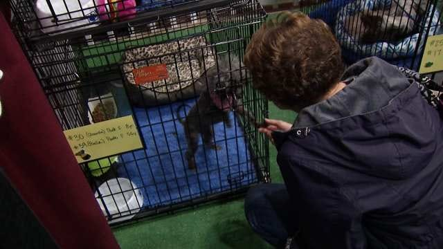 Sand Springs Puppy Mill Dogs Finding Homes At Home And Garden Show