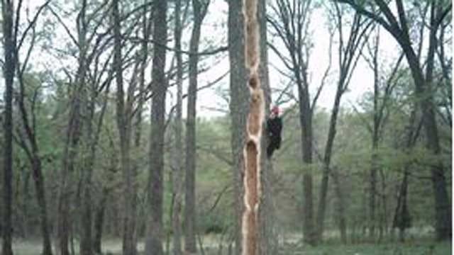 Beggs Couple Uses Camera To Capture Tree 'Vandalism' Culprit
