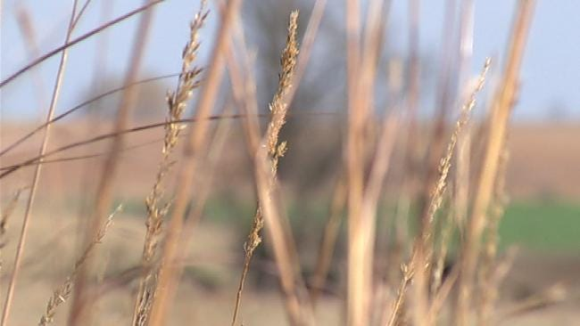 In Ironic Twist, Drought-Ridden Oklahoma Wheat Harvest On Hold For Storms