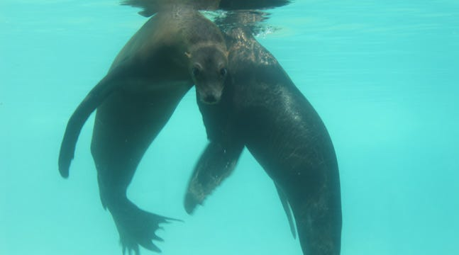Rescued Sea Lions Set To Make Debut At Tulsa Zoo