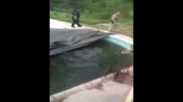 Bartlesville Family Wakes Up To Deer In Its Swimming Pool