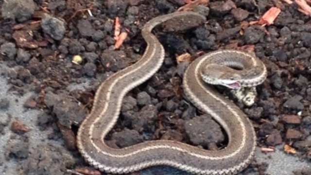 Construction Sends Snakes Slithering Into Owasso Neighborhood