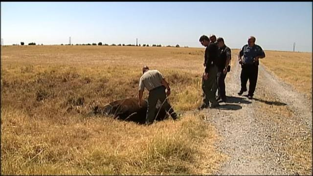 Rogers County Ranchers Wait For Justice In Animal Cruelty Case