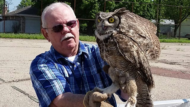 Owl Appears Grateful After Being Saved By Ponca City Man