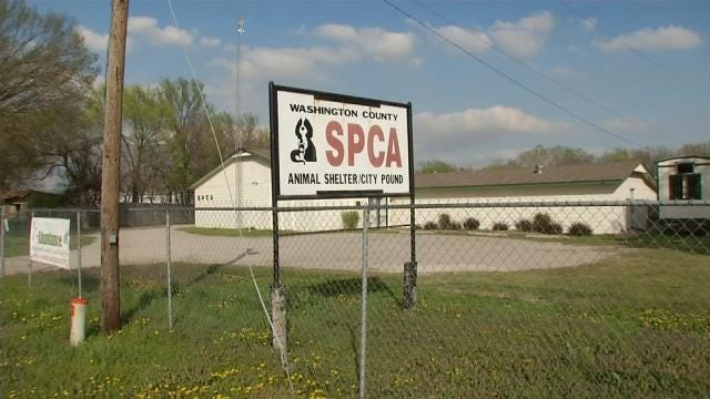 Animal Advocates: Washington County Shelter Discriminates Against Pit Bulls