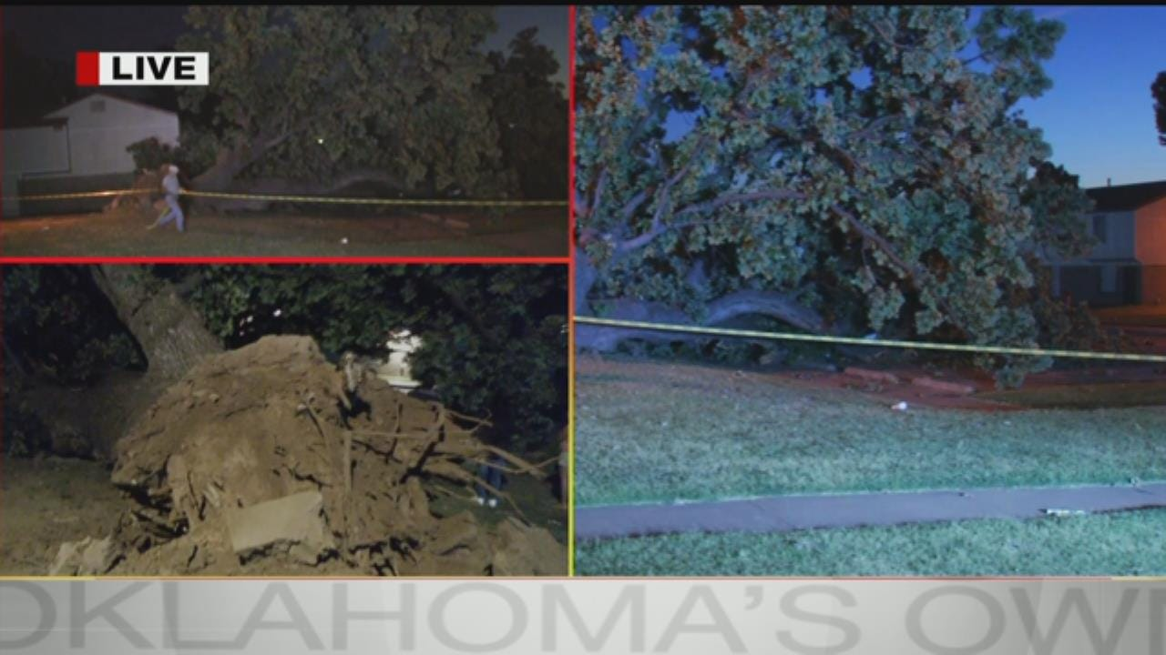 Tree Crashes Down On Cars At Tulsa Apartment Complex