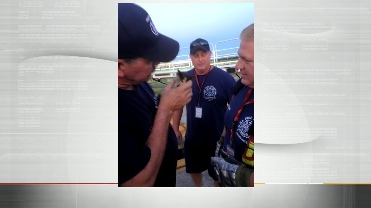 Firefighters Rescue Kitten At Tulsa Airport