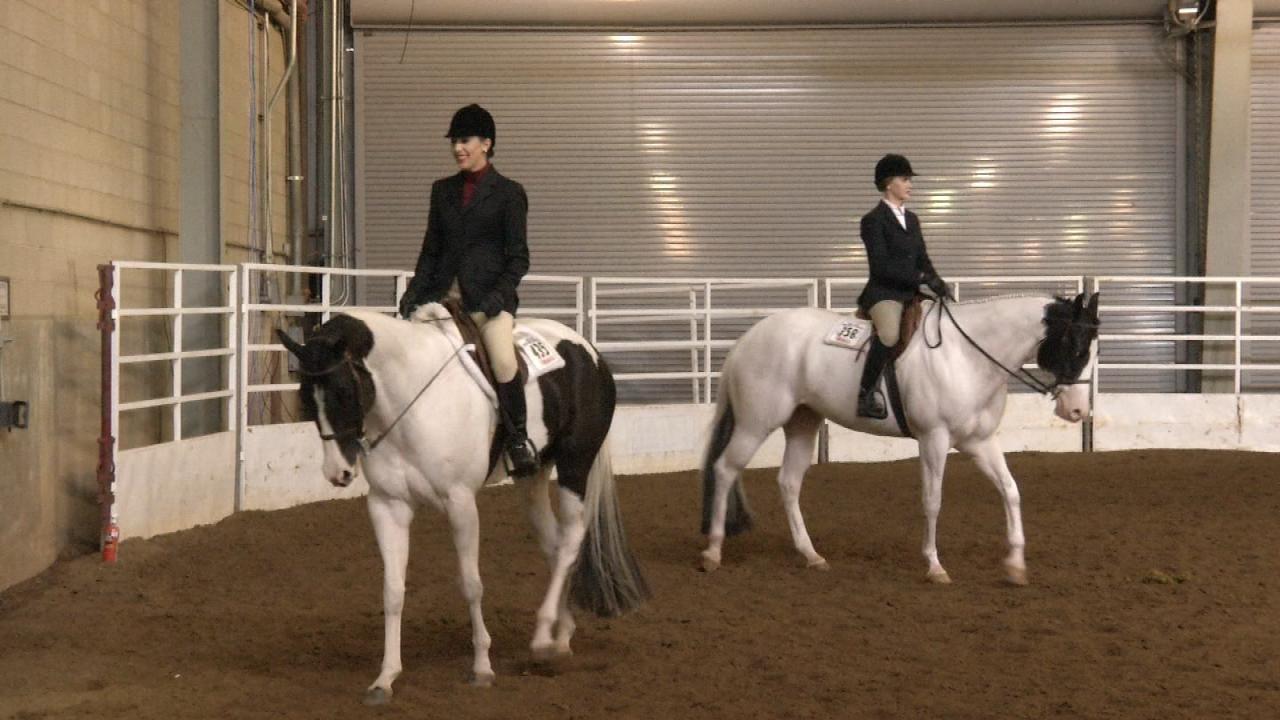 Paint Horse Competition Fills Tulsa Fairgrounds