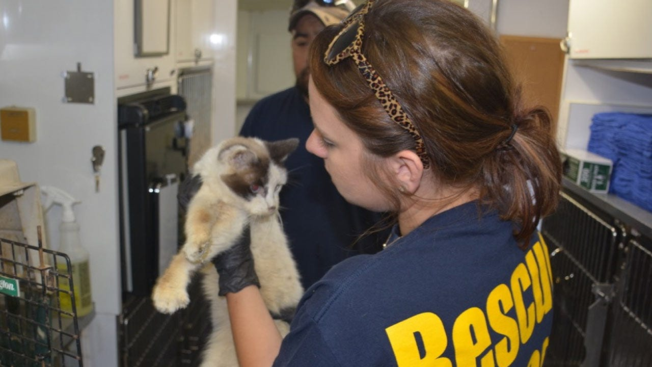 Cats Rescued From Terminally Ill Oklahoma Owner Need New Homes