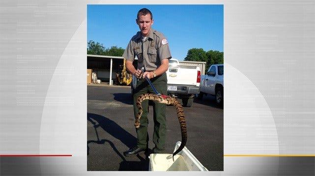 Ranger Captures Rattlesnake At Oologah Lake