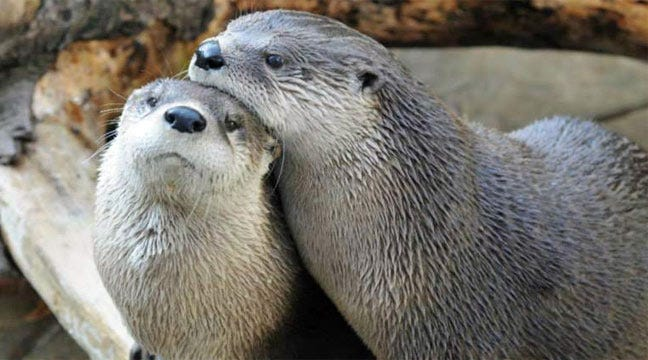 Tulsa Zoo Hosts First-Ever Singles Valentine's Mixer Friday