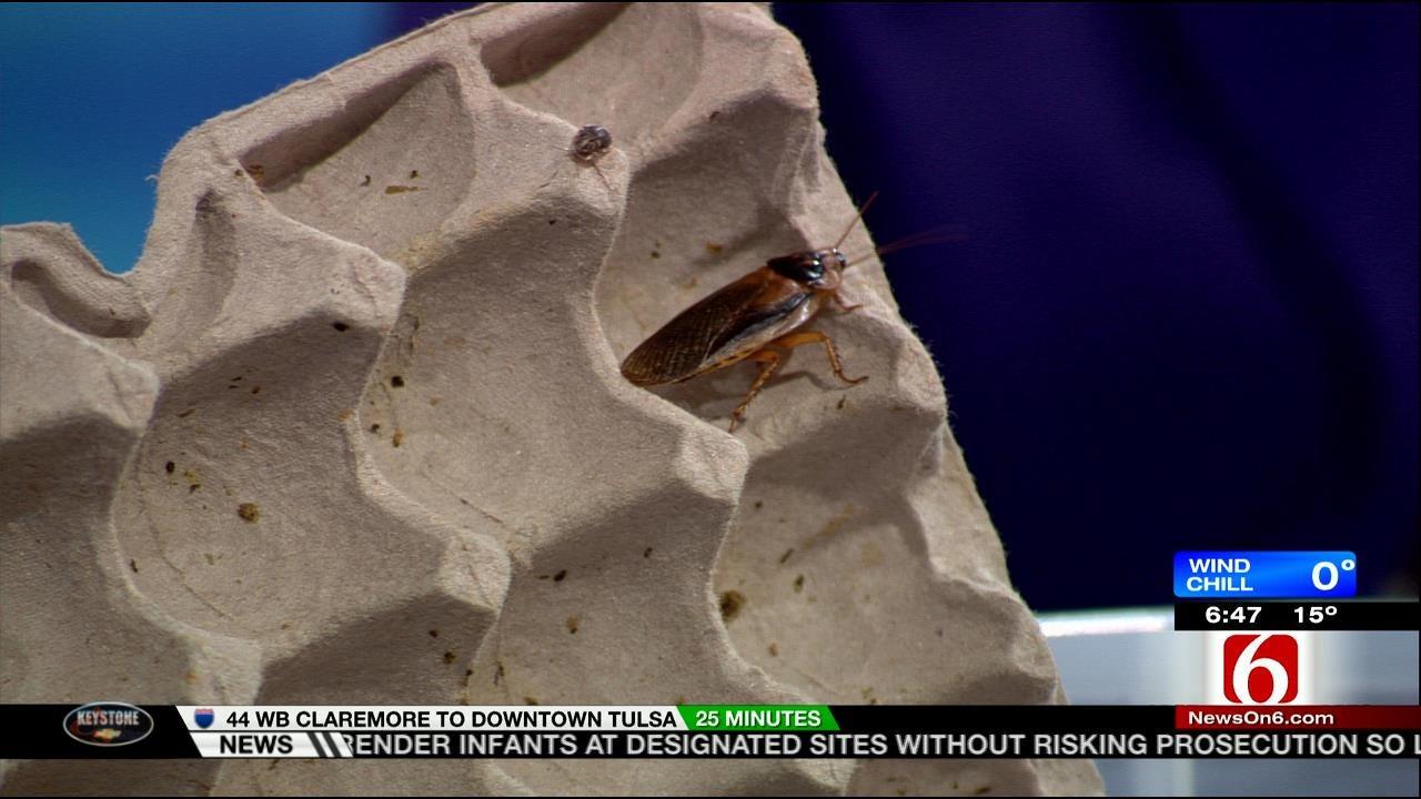 8-Year-Old Tulsa Cockroach Expert Becomes Internet Sensation