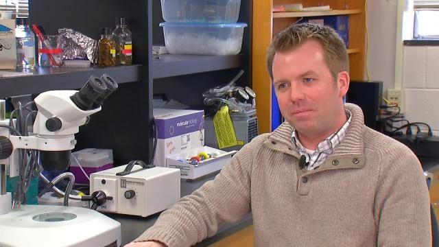 TU Study Shows Bats, Cavemen To Thank For Bedbugs