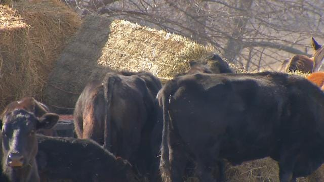 Officials Find Dozens Of Dead, Neglected Livestock On Muskogee County Ranch