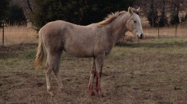 Kiefer Police Rescue Abandoned Mare, Colt In Rural Creek County